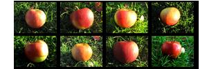 Apfelsorten auf der Straßenmühle