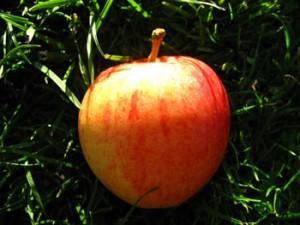 Gala Bio-Apfel