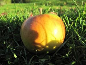 Goldparmäne Bio-Apfel