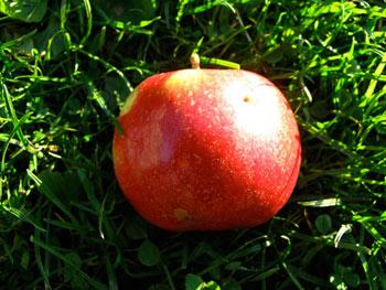 Idared Bio-Apfel
