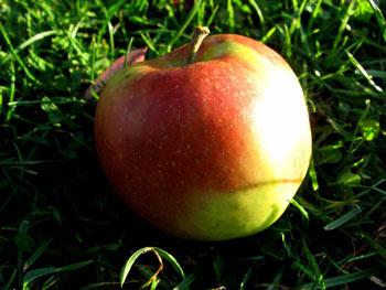 Jonagold Bio-Apfel