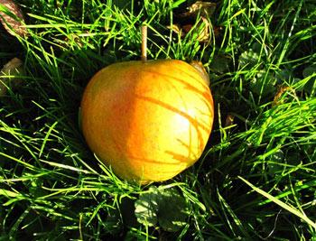 Rubinette Bio-Apfel