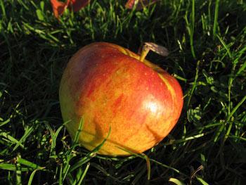 Topaz Bio-Apfel