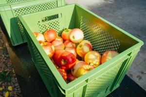 Bio-Äpfel werden per Päckchen zu Ihnen au den Weg gebracht